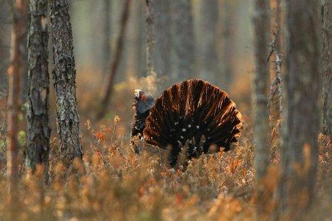 El maravilloso mundo de naturaleza salvaje en exposición de Moscú