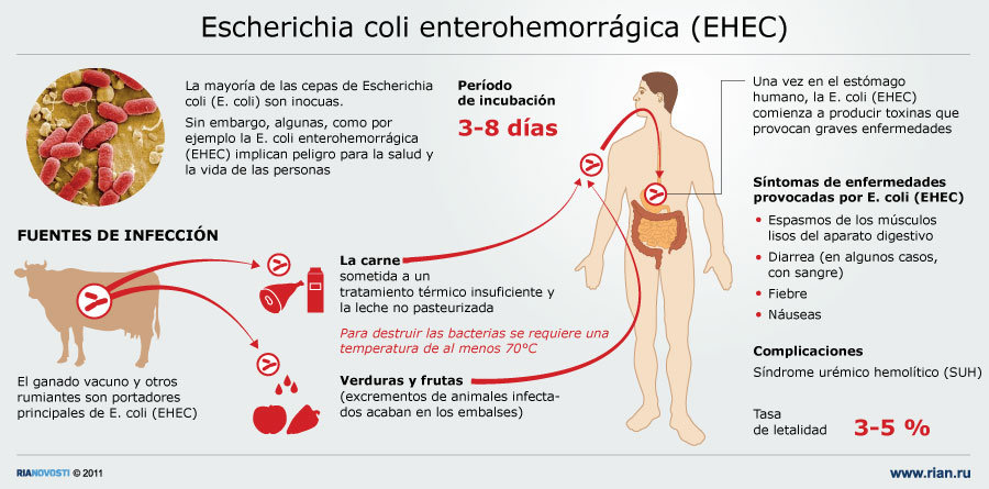 Resultado de imagen para E.coli enterohemorrágico
