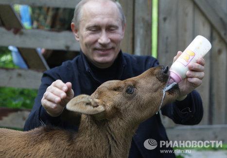 Владимир Путин посетил Лосиный остров