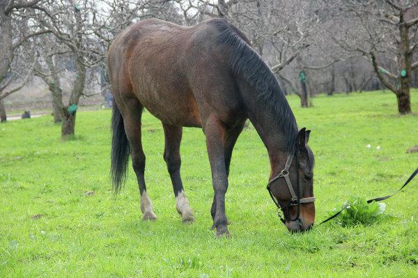 Конь по кличке Водолей из конно-спортивного клуба при  парке Останкино