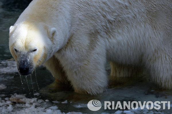 Медведи в Новосибирском зоопарке