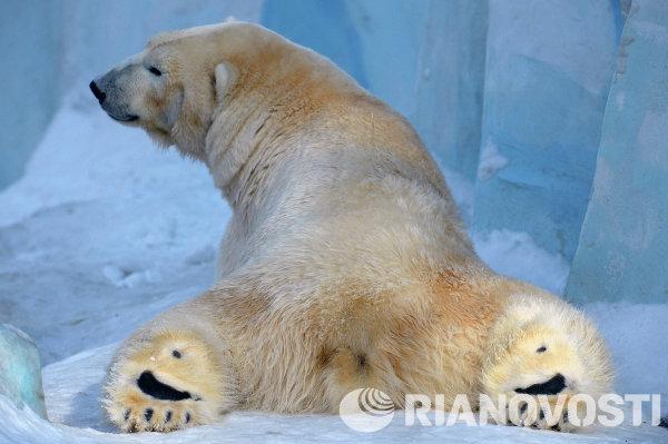 Медведь в Новосибирском зоопарке