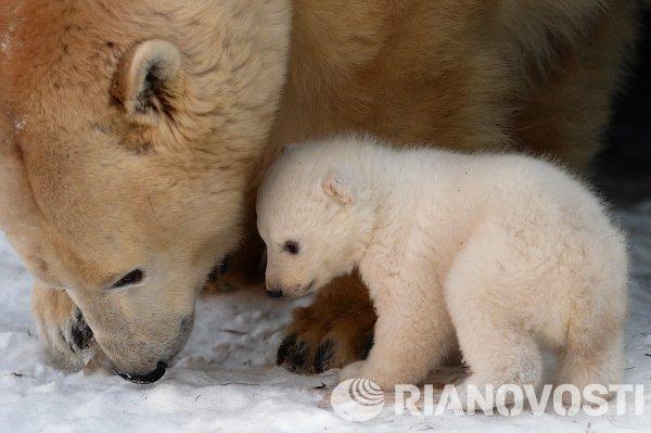 Новорожденный медвежонок в зоопарке Новосибирска